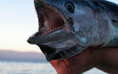 Tengeri horgászat, halásztúrák